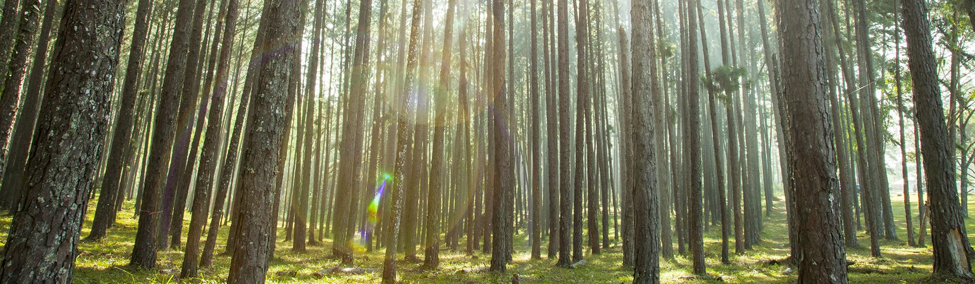 Wälder für die Welt